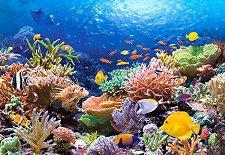 Коралов риф - пъзел
