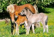 Понита на поляната - пъзел