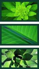 Флорална импресия в зелено - Три пъзела - пъзел