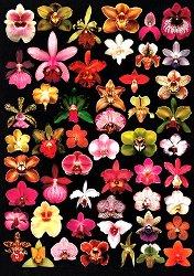 Декупажна хартия - Изобилие от орхидеи 639