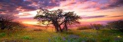 "Дъб - панорама - Колекция ""Александър Фон Хумболт"" (Alexander von Humboldt) - пъзел"