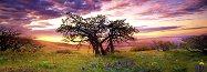 """Мини пъзел - панорама: Дъб - Колекция """"Александър Фон Хумболт"""" (Alexander von Humboldt) -"""